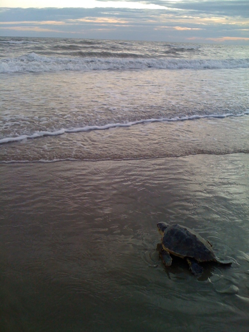 ciao tortue!